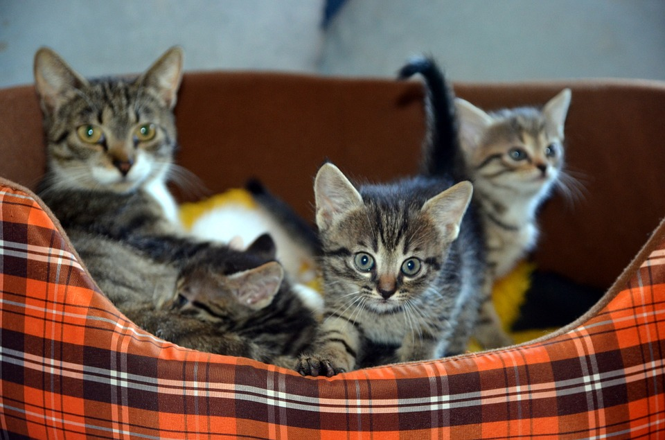 7 Cat Care Mistakes to Avoid - Smart Cat Lady