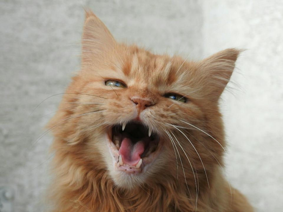 cougar dating denver